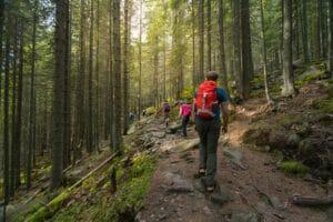 Wandern im Schwarzwald in der Region Baiersbronn